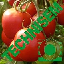 Tomates cobra 26 de Togosem Sarl