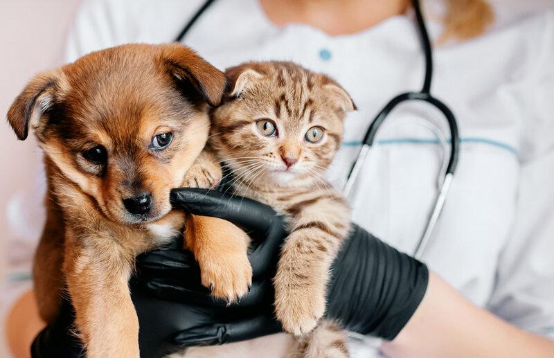 Vaccination des canins et félins, Agrovet Sarl